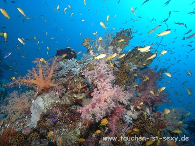Korallenriff Ägypten