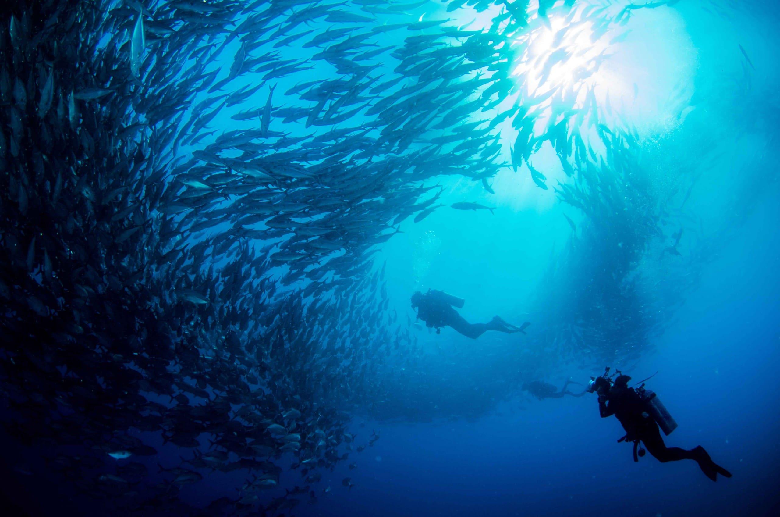 Taucher Fotograf im Fischschwarm