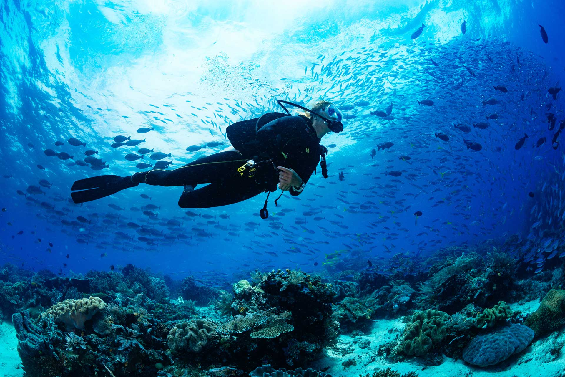Taucher im Riff